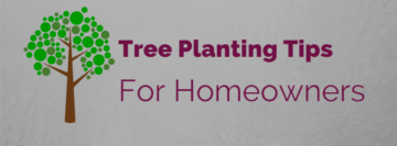 Tree Planting Tips For Central OH
