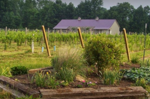 Soine Vineyard and garden
