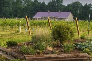 Soine Vineyard and garden
