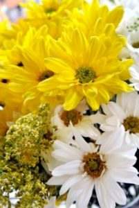 yellow and white flowers