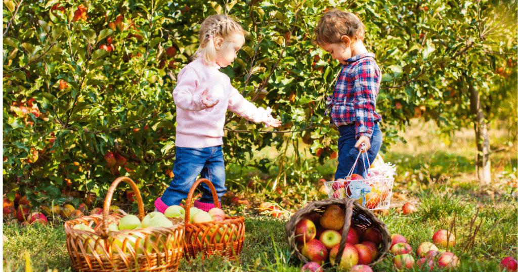 Kids Picking Apples At A Farm